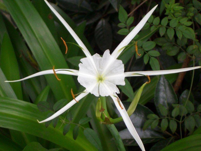 Plantes exotiques centerblog for Plantes exotiques