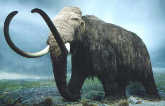 Clonage : Un mammouth d'ici 2015 ?