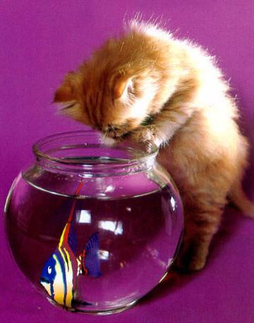 http://pepinemom.p.e.pic.centerblog.net/h0q0qs0y.jpg