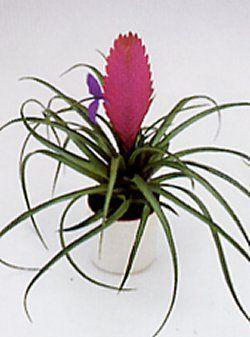 Plantes exotiques plante for Plantes exotiques