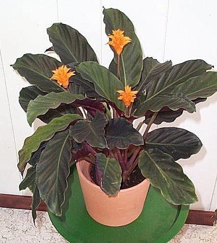 Plantes exotiques page 2 for Plantes exotiques